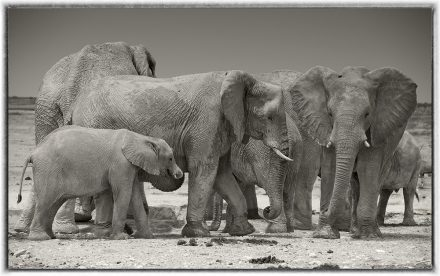 Elephants at Etosha Pan, Namibia, 2012, archival ink jet print on Hannemuhle cotton rag, 72 x 113 cm, signed in margin.